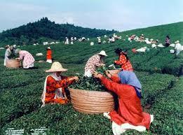 دانلود فایل نقش زنان روستایی در اقتصاد روستا به صورت word